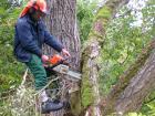 Baumfällarbeiten in Lichte